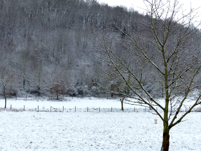 toont landschap in Fischbachtal in de winter